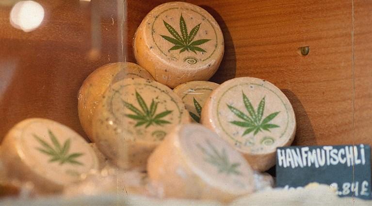 Hanfmutschli-queso-suizo-elaborado-con-leche-de-vaca-y-cannabis-marihuana-El-Portal-del-Chacinado