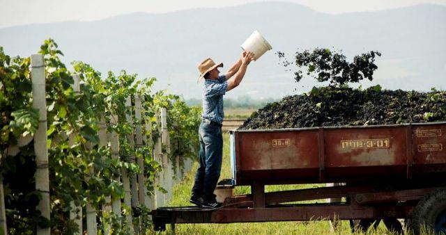Los-100-mejores-vinos-del-mundo-el-portal-del-chacinado