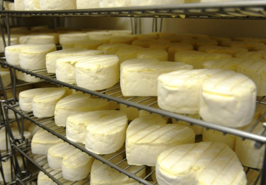 Neufchatel-AOC-el-queso-francés-con-denominacion-de-origen-con-forma-de-corazón-El-Portal-del-Chacinado
