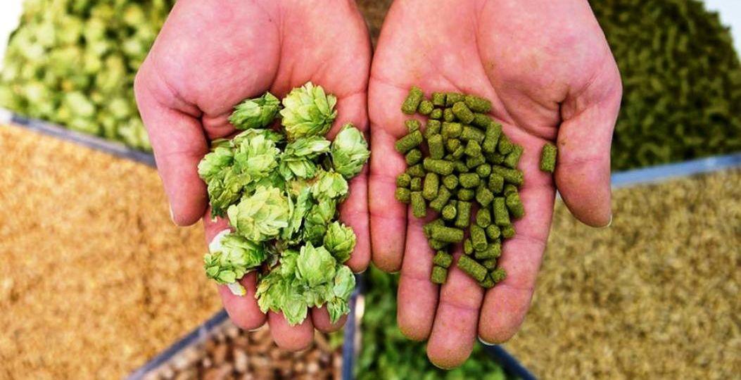 Tipos-de-lúpulos-para-elaborar-cerveza-El-Portal-del-Chacinado